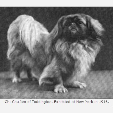 Ch Chu Jen of Toddington 1913 Best of Breed