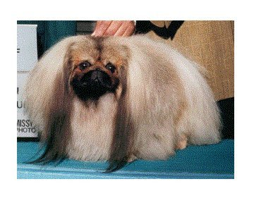 Ch Franshaw Devil in Disguise of Eastcourt 2001 Best of Breed 1