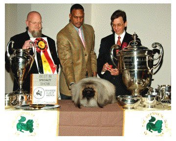 Ch Franshaw Heart Of A Lion 2008 Best of Breed