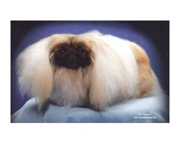 Ch Pequest Persuasive 2007 Best of Breed