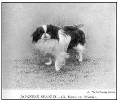 Japanese Spaniel for club history.