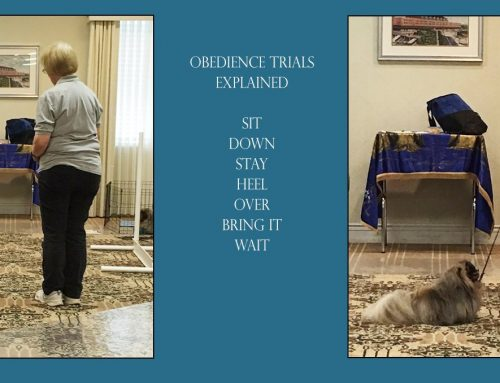 Obedience Trials Explained