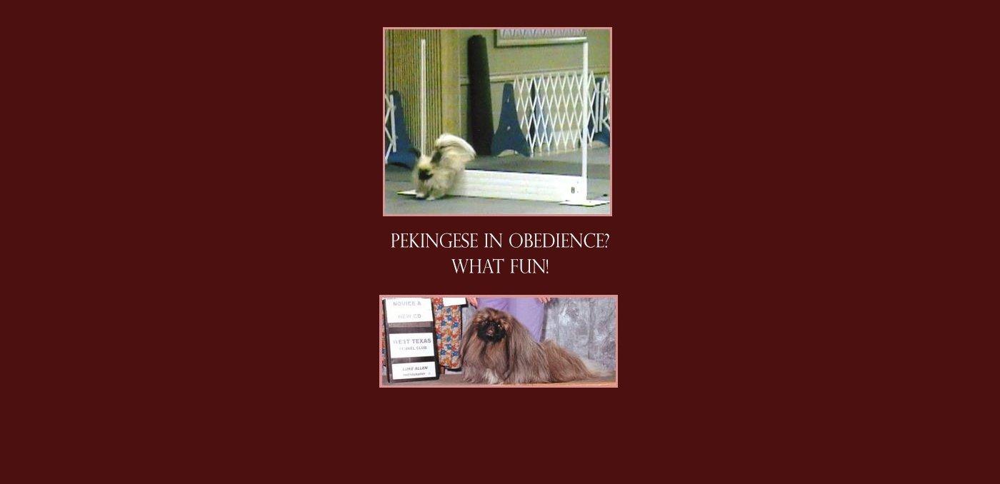 Pekingese in Obedience What fun