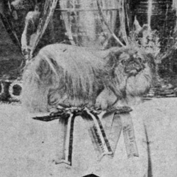 Pierrot of Hartlebury 1933 Best of Breed