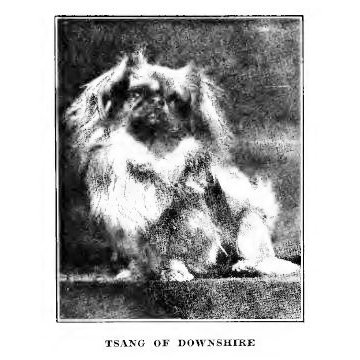 Tsang of Downshire 1911 Best of Breed