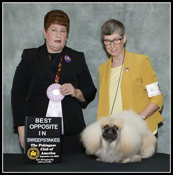 BOS IN SWEEPSTAKES PRIMA JOLENE