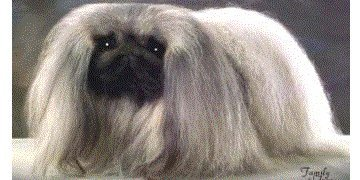 Ch Taeplace Monet 2001 Best of Breed