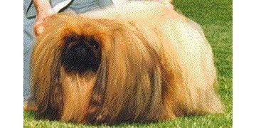 Ch Taeplace Tabasco at Ja Ling 1993 Best of Breed