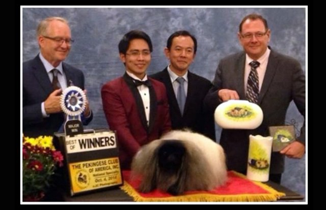 Winners Dog Best of Winners Livanda Faberge
