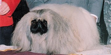 Ch Taeplace Monet 2000 Best of Breed2